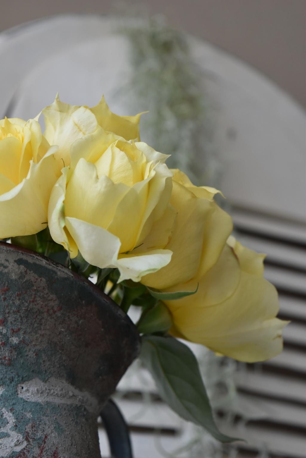 Flowertuft5