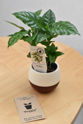 coffeetree1