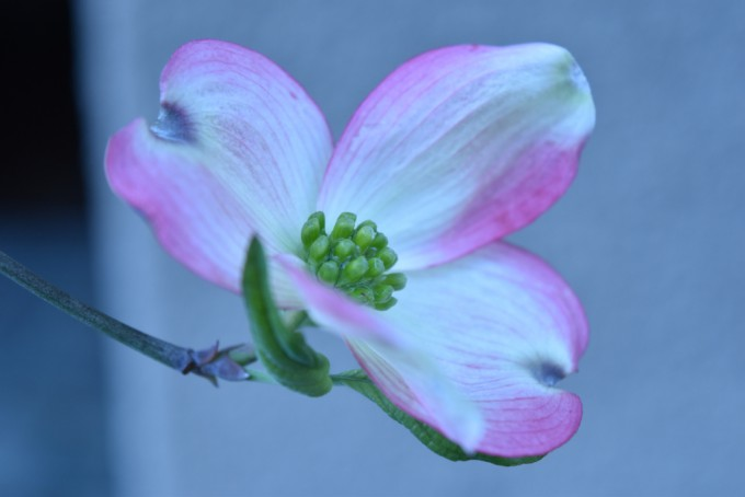 Flowertuft1