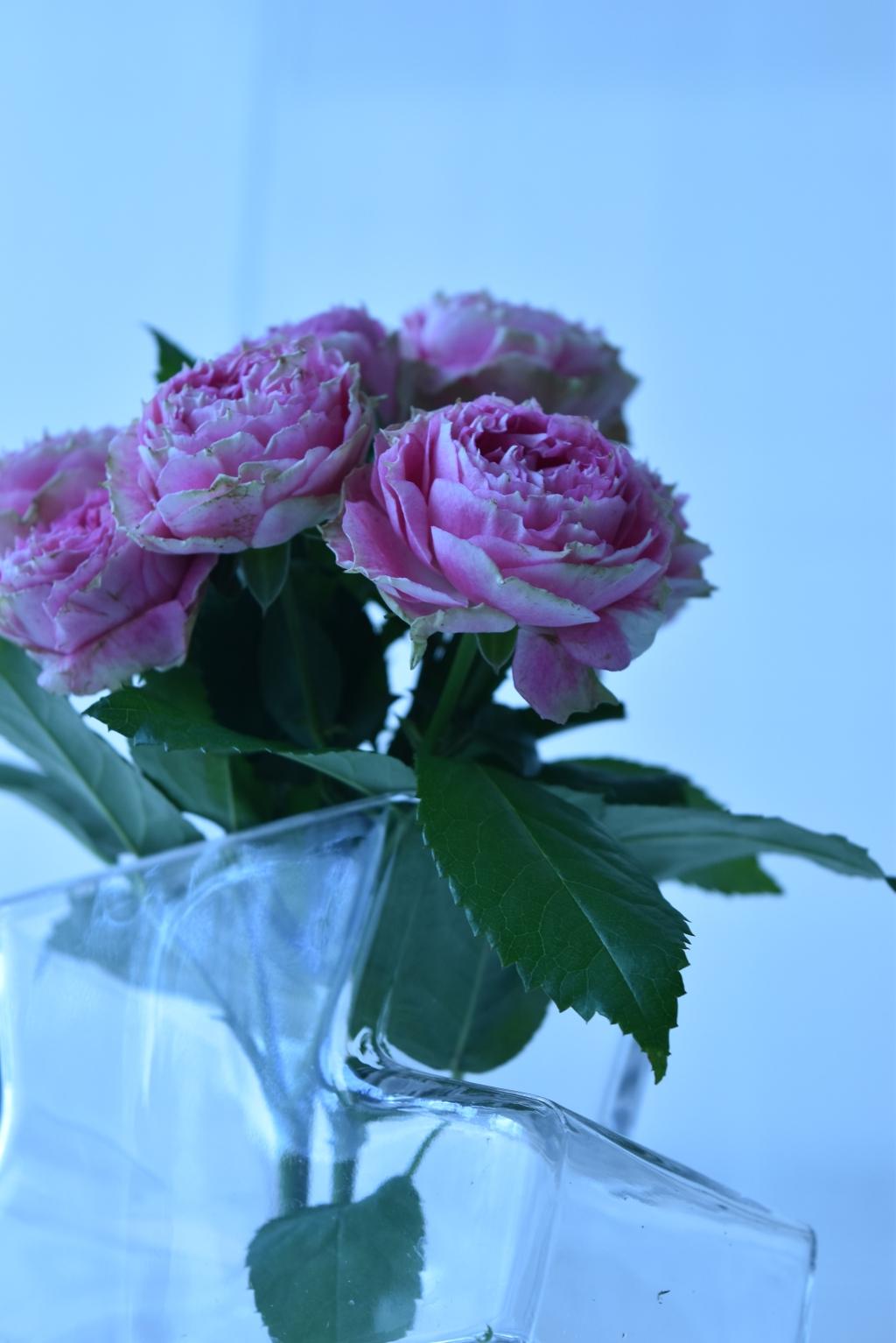 Flowertuft6