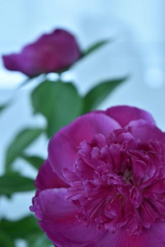 Flowertuft8
